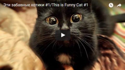 Скачать веселые и смешные видео - смотреть бесплатно