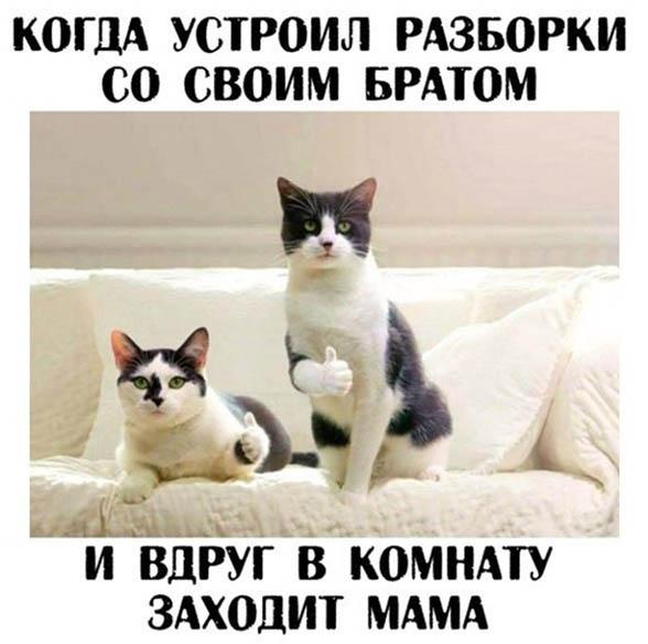 Смешные животные - фото с надписями, новые, свежие, веселые 10