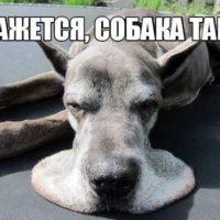 Смешные животные - фото с надписями, новые, свежие, веселые 14