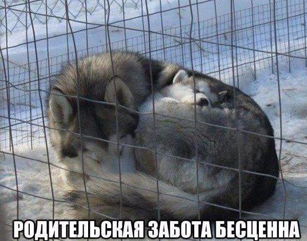 Смешные животные - фото с надписями, новые, свежие, веселые 9