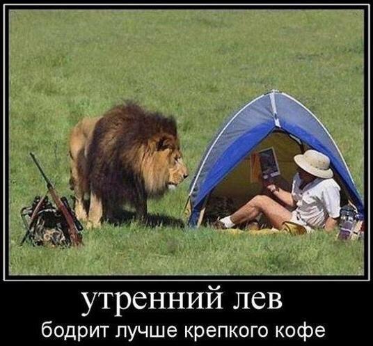 Смешные картинки про животных до слез - смотреть бесплатно 12