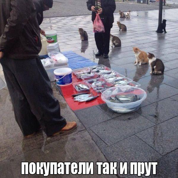 Смешные картинки про животных до слез - смотреть бесплатно 3