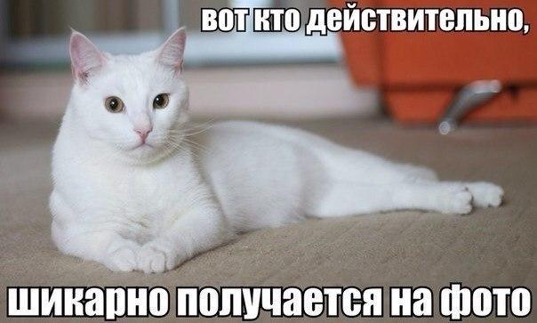 Смешные картинки про животных до слез - смотреть бесплатно 5