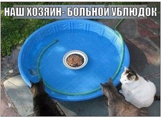 Смешные картинки про животных до слез - смотреть бесплатно 8