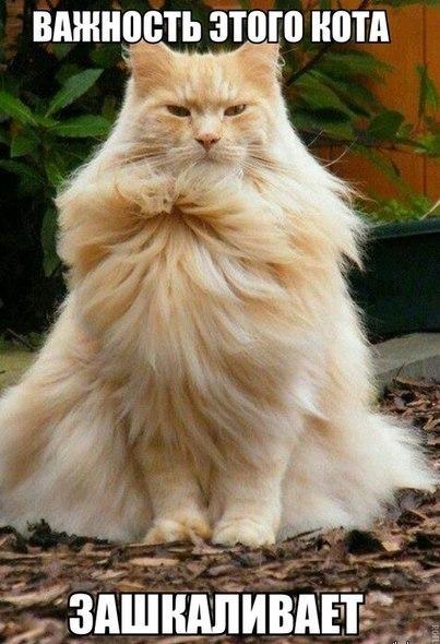 Смешные картинки про котов до слез - смотреть бесплатно 12