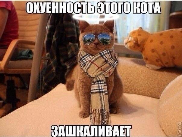 Смешные картинки про котов до слез - смотреть бесплатно 13