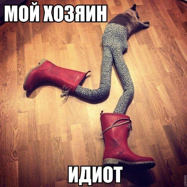 Смешные картинки про котов до слез - смотреть бесплатно 14
