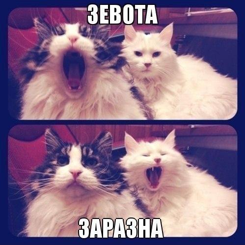 Смешные картинки про котов до слез - смотреть бесплатно 5