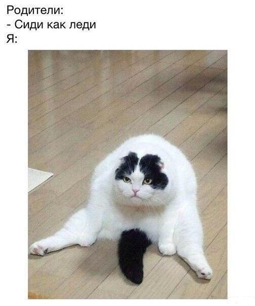 Смешные картинки про котов до слез - смотреть бесплатно 7