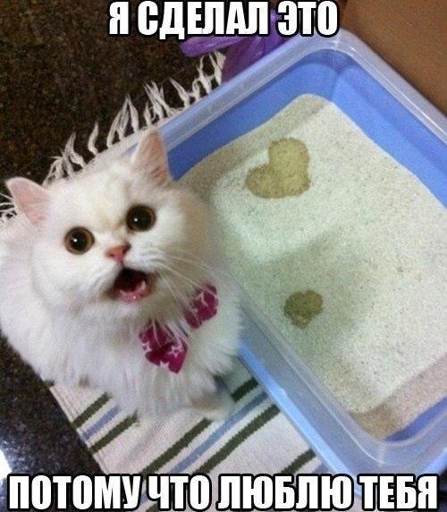 Смешные картинки про котов до слез - смотреть бесплатно 8