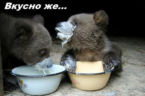 Смешные картинки с надписями про животных - смотреть бесплатно 1