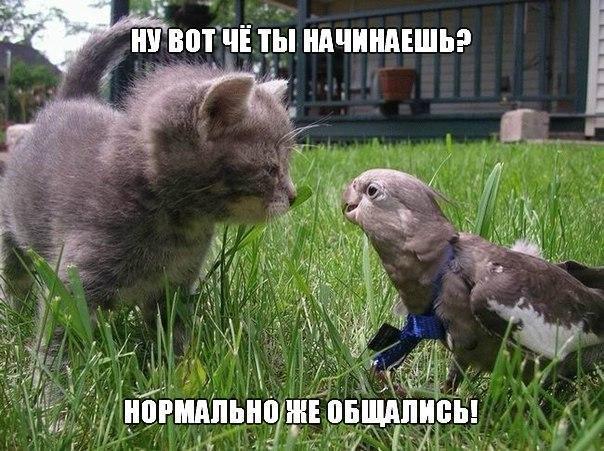 Смешные картинки с надписями про животных - смотреть бесплатно 10