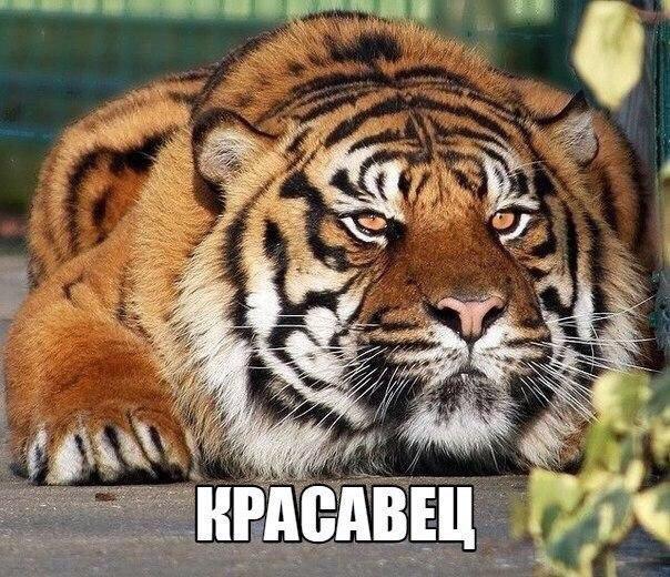 Смешные картинки с надписями про животных - смотреть бесплатно 11