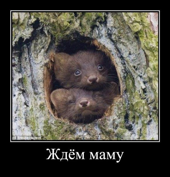 Смешные картинки с надписями про животных - смотреть бесплатно 12