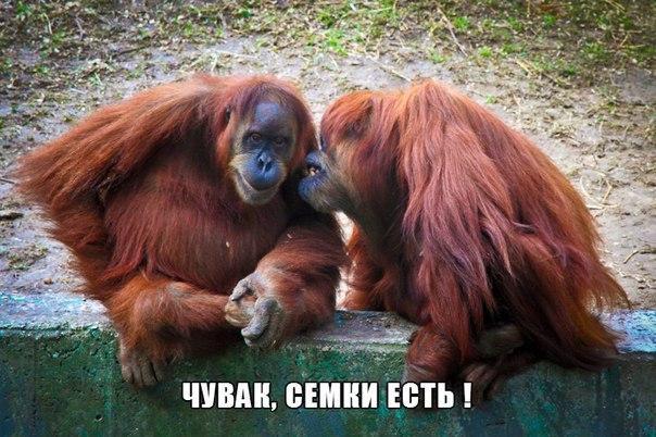 Смешные картинки с надписями про животных - смотреть бесплатно 5