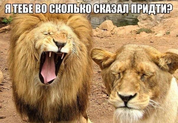 Смешные картинки с надписями про животных - смотреть бесплатно 6