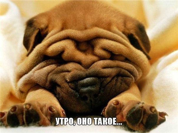 Смешные картинки с надписями про животных - смотреть бесплатно 7