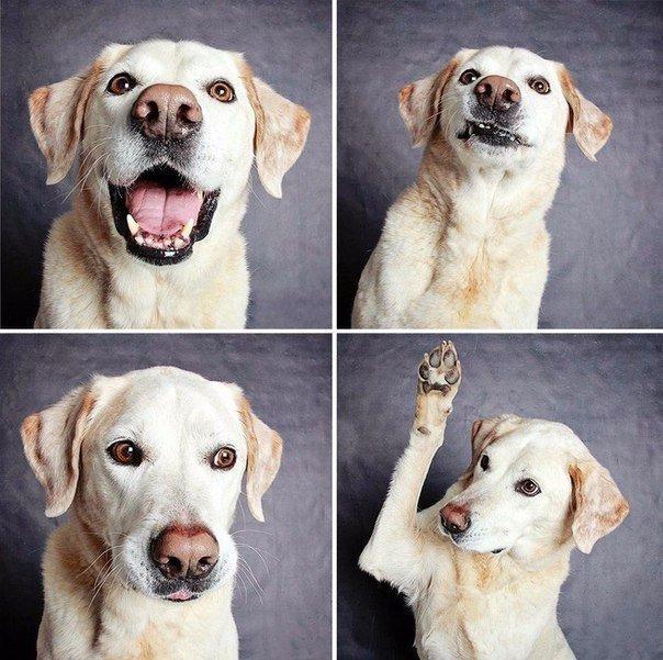 Смешные собаки - фото до слез, прикольные, веселые, забавные 12