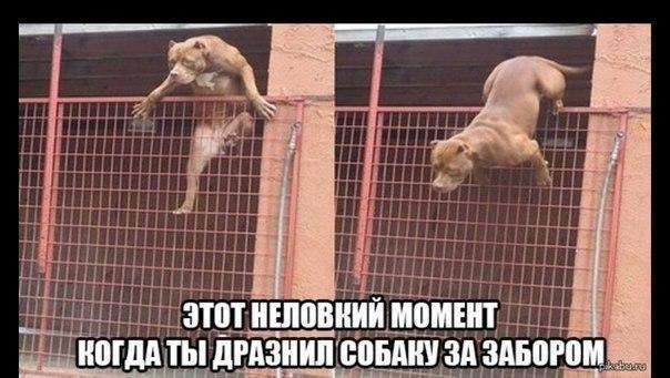 Смешные собаки - фото до слез, прикольные, веселые, забавные 3