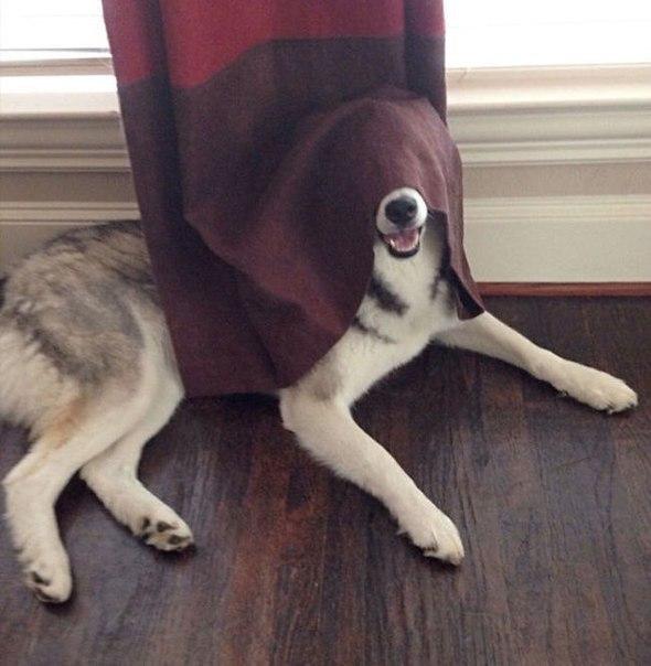 Смешные собаки - фото до слез, прикольные, веселые, забавные 5