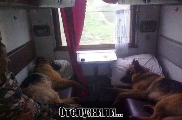 Смешные фото про собак до слез - смотреть бесплатно, онлайн 11