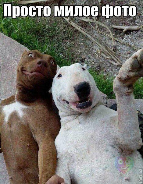 Смешные фото про собак до слез - смотреть бесплатно, онлайн 12