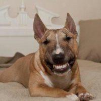 Смешные фото про собак до слез - смотреть бесплатно, онлайн 13
