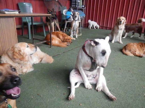 Смешные фото про собак до слез - смотреть бесплатно, онлайн 16