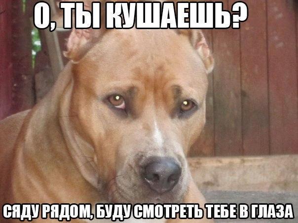 Смешные фото про собак до слез - смотреть бесплатно, онлайн 17