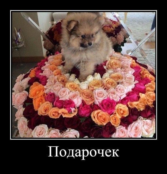 Смешные фото про собак до слез - смотреть бесплатно, онлайн 2