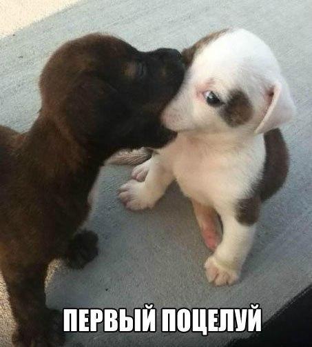 Смешные фото про собак до слез - смотреть бесплатно, онлайн 4