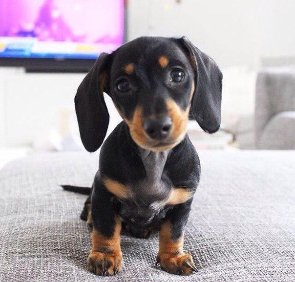 Смешные фото про собак до слез - смотреть бесплатно, онлайн 7