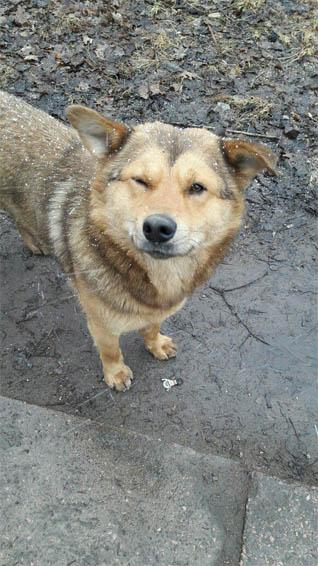 Собаки фото - красивые и смешные, прикольные, удивительные 11