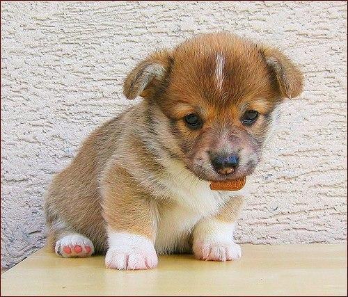 Собаки фото - красивые и смешные, прикольные, удивительные 12