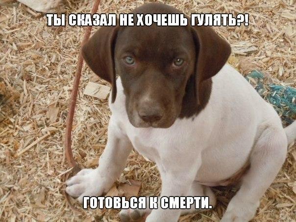 Собаки фото - красивые и смешные, прикольные, удивительные 3