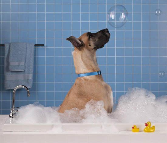 Собаки фото - красивые и смешные, прикольные, удивительные 4