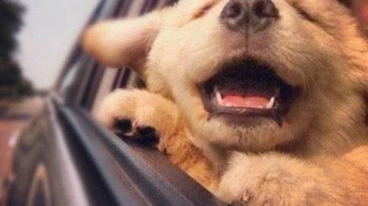 Собаки фото - красивые и смешные, прикольные, удивительные 6