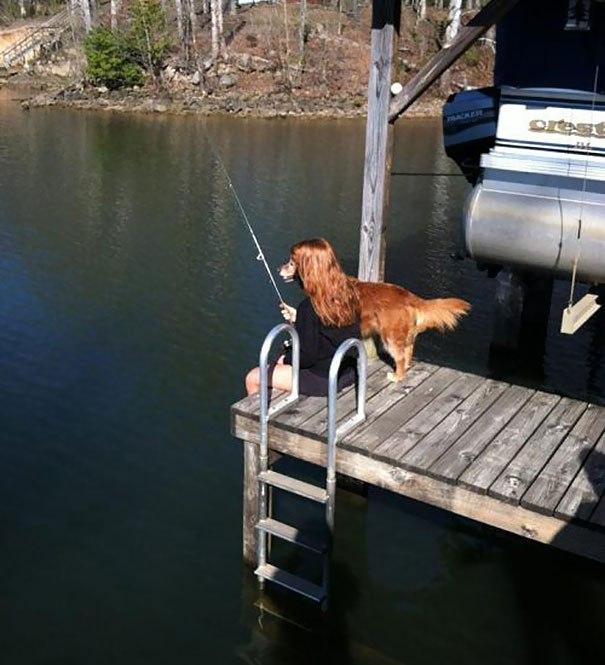 Собаки фото - красивые и смешные, прикольные, удивительные 7