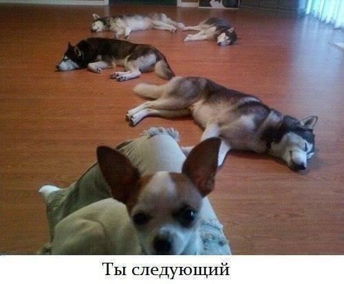 Собаки фото - красивые и смешные, прикольные, удивительные 8