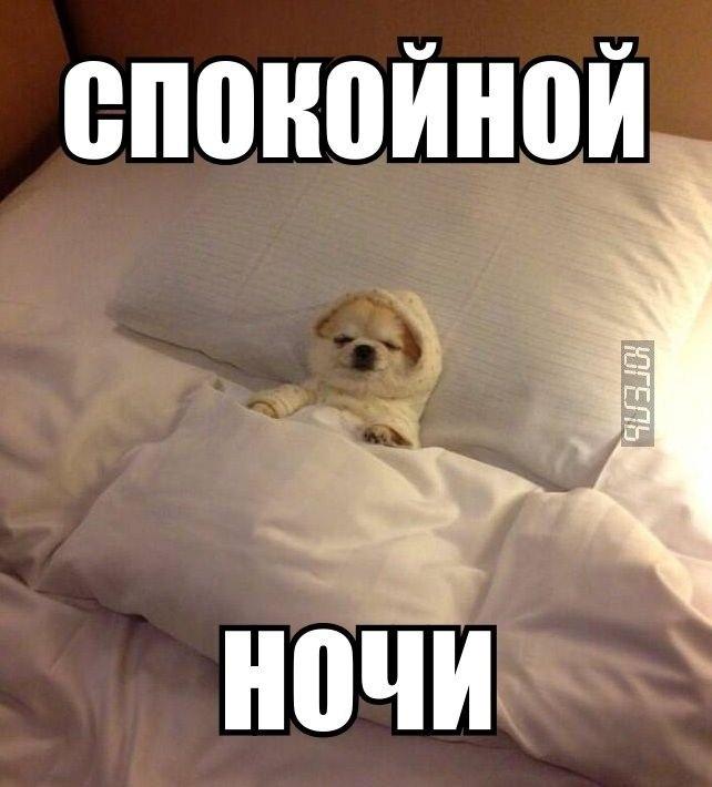 Спокойной ночи картинки - прикольные, смешные, красивые 2