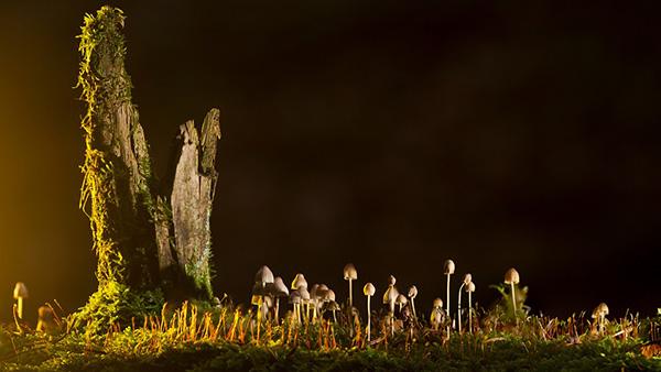 Удивительные и красивые картинки про природу - смотреть бесплатно 5