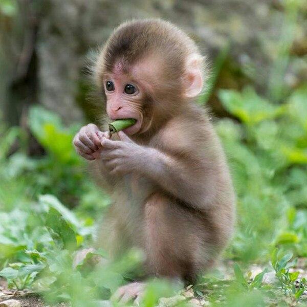 Фото обезьяны - смешные, веселые, ржачные, прикольные 13