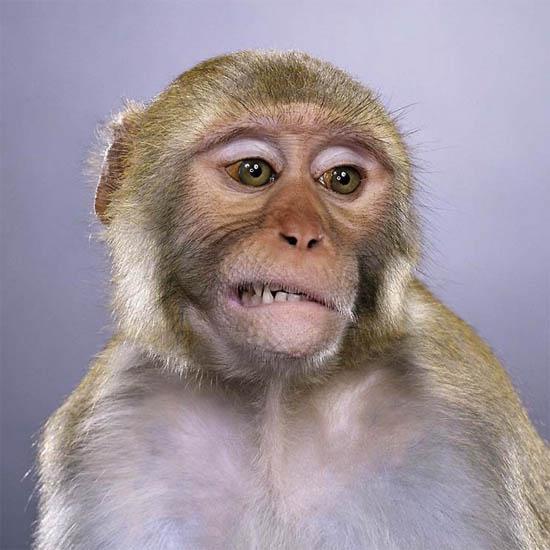 Фото обезьяны - смешные, веселые, ржачные, прикольные 2