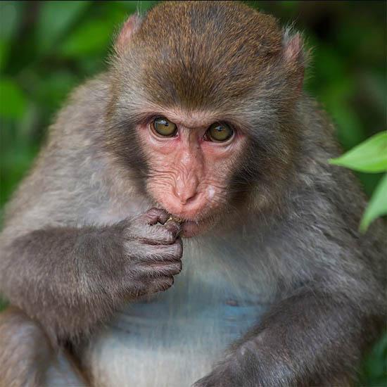 Фото обезьяны - смешные, веселые, ржачные, прикольные 8