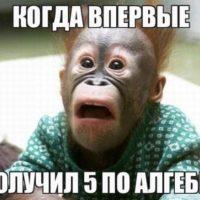 Фото обезьян - прикольные, смешные, веселые, забавные 9