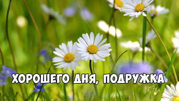 Хорошего дня подруга - картинки, фото, пожелание, открытки 1