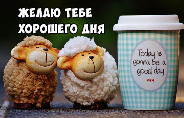Хорошего дня подруга - картинки, фото, пожелание, открытки 7