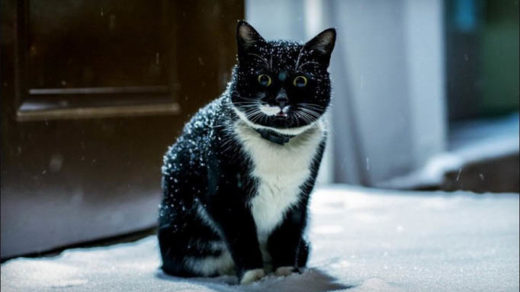 Черно-белые коты - фото, картинки, красивые, прикольные 17