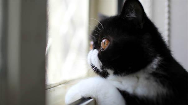 Черно-белые коты - фото, картинки, красивые, прикольные 2