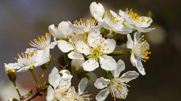 Весна фото красивые - удивительная природа, смотреть фото 1